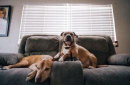 Hondencamera huisdiercamera